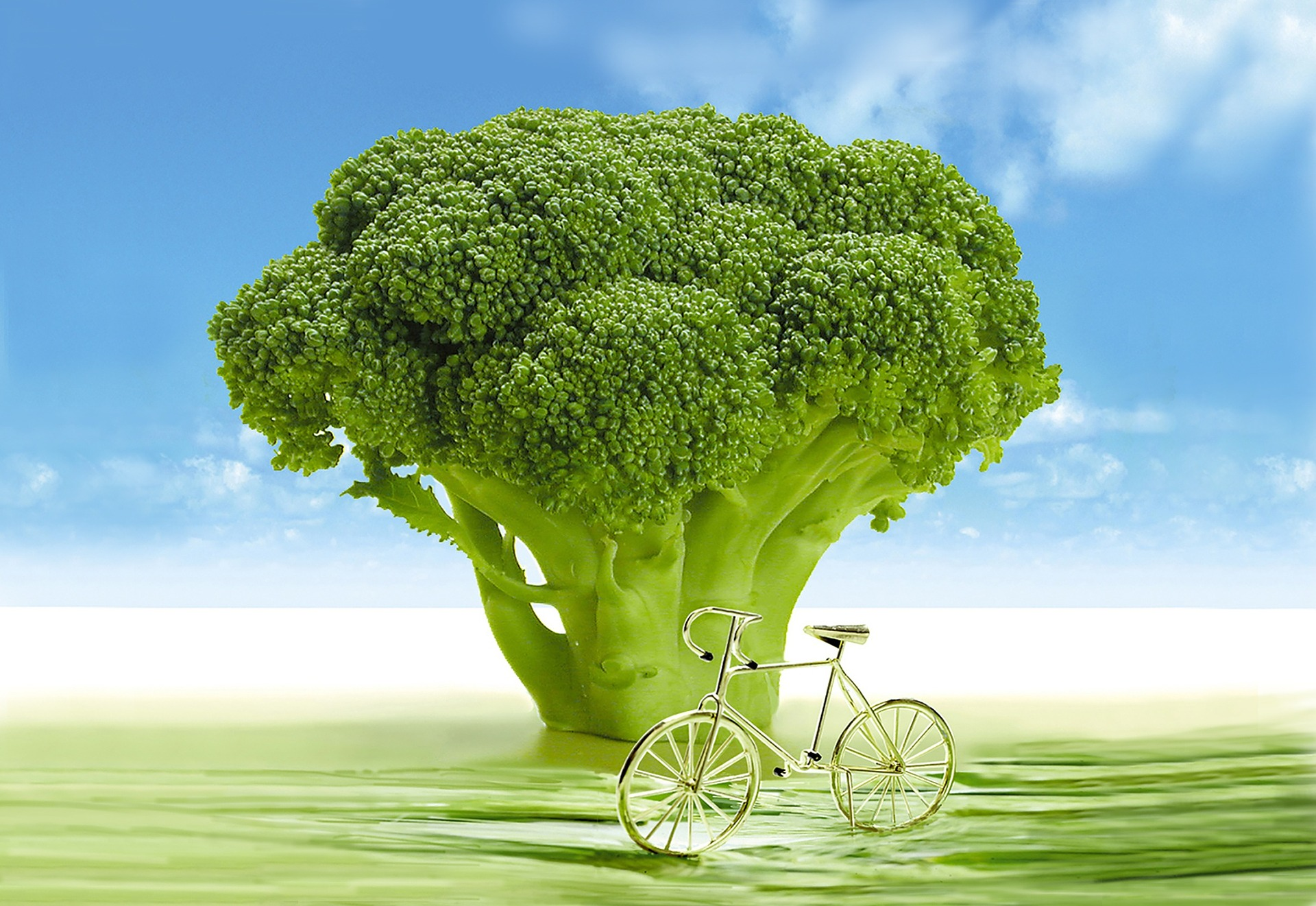 brokkoli 1.jpg